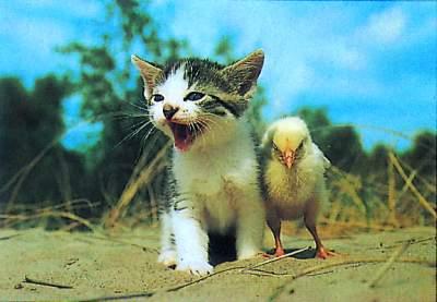 可爱小猫眯_搞笑猪吧_百度贴吧