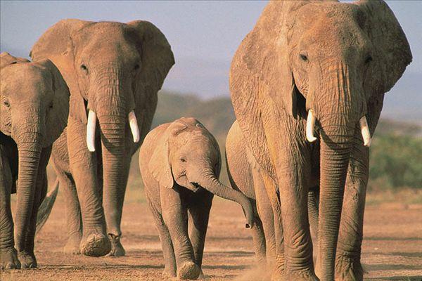 壁纸 大象 动物 600_400