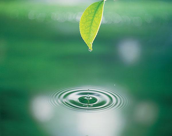 背景 壁纸 绿色 绿叶 树叶 植物 桌面 600_476