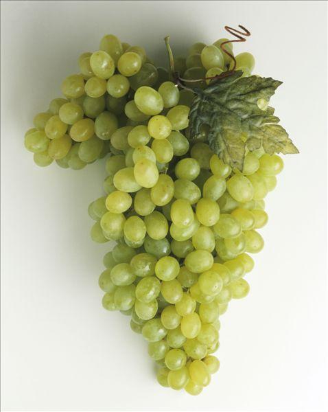 图片标题:绿葡萄,叶子