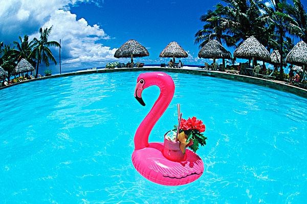 标题: 拉罗汤加岛 标签: 库克群岛,拉罗汤加岛,胜地,水池,热带饮料,粉红火烈鸟,漂浮,固定器具 描述: 库克群岛,拉罗汤加岛,胜地,水池,热带饮料,粉红火烈鸟,漂浮,固定器具 英文描述: Cook Islands, Rarotonga, Resort swimmimg pool. Tropical drink with pink flamingo float holder.