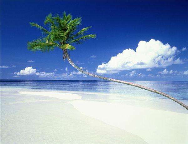 马尔代夫风光 棕榈树,海洋,俯视图 棕榈树,海洋,多巴哥岛 海滩,岛屿