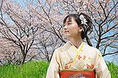 女人 樱花/日本人,女人,和服,樱花下载相似预览购买