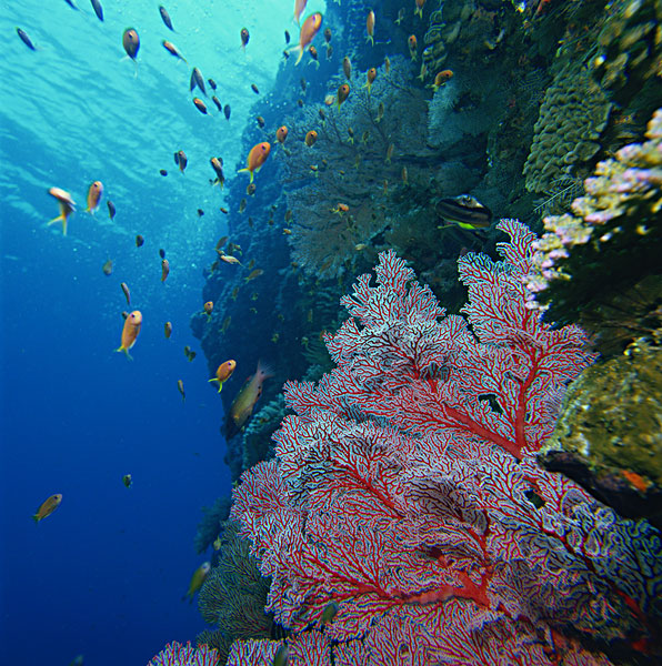 海底动物-海底动物图片下载-海底动物图片大全-全景