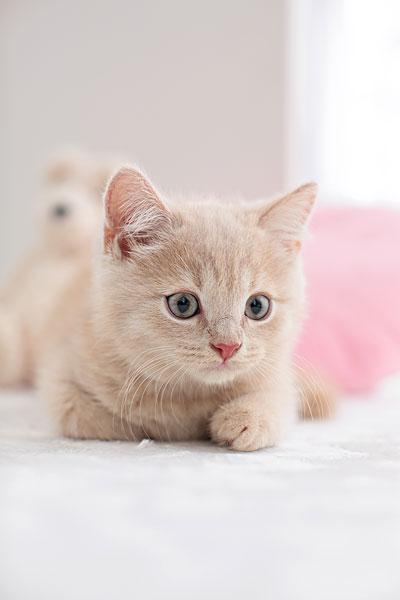 站立小猫的简笔画步骤