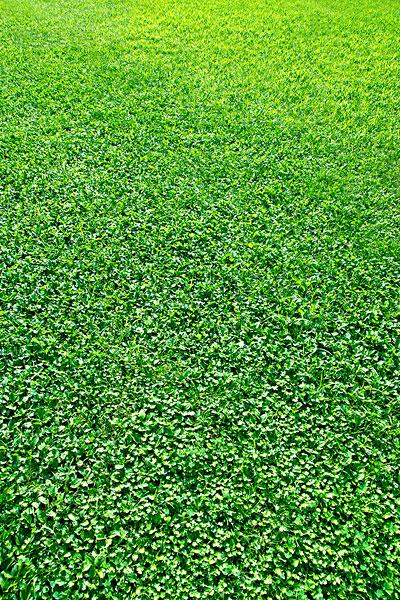 壁纸 草原 成片种植 风景 植物 种植基地 桌面 400_600 竖版 竖屏