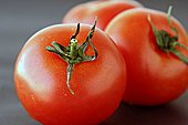 水果 西红柿/特写西红柿果实
