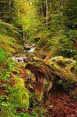 树林,峡谷