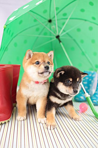 雨伞_雨伞图片_全景时尚