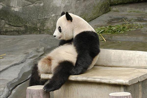 >重庆动物园