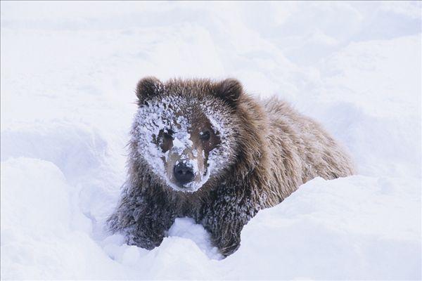 阿拉斯加野生动物保护中心