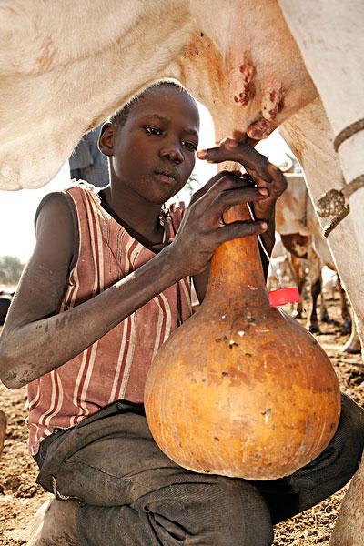 南苏丹有什么名贵木材