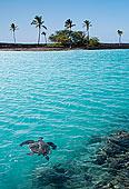 龟,游泳,热带,水