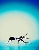 剪影,蚂蚁