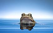 窥视了水的青蛙