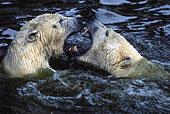 创意 极地/两个,极地,熊,玩,水下载相似预览购买...