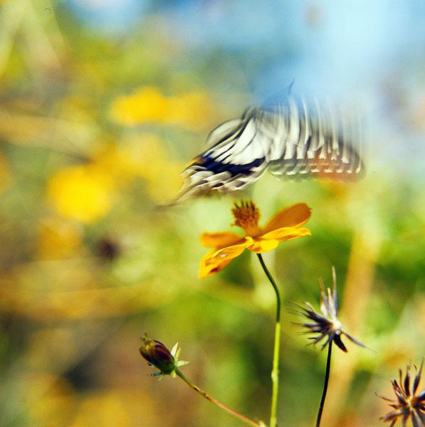 花瓣摆出来动物