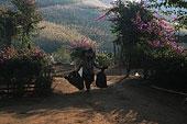 云南思茅地区孟连县芒信乡海东村芒旧新寨是一个哈尼族的村寨。他们自己种植山花来美化自己居住的寨子。