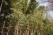 江苏苏州园林