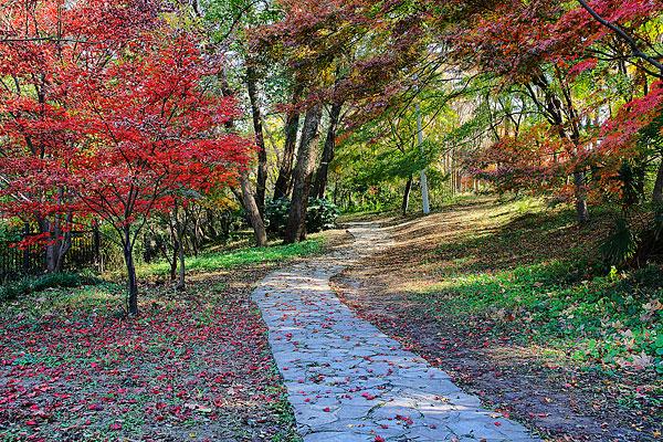 南京钟山风景区中山植物园风光