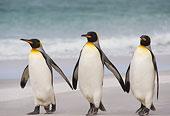 雪地上的三只企鹅