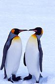 雪地上的一对企鹅