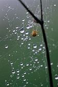 蜘蛛的特写镜头