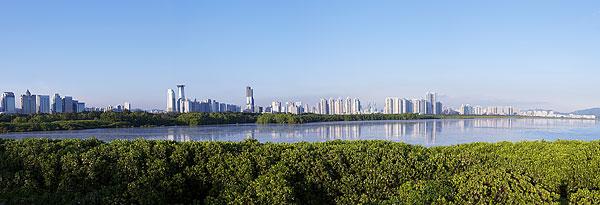 深圳红树林_>深圳红树林