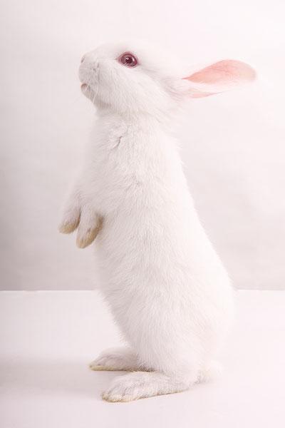 小白兔图片_小白兔图片大全