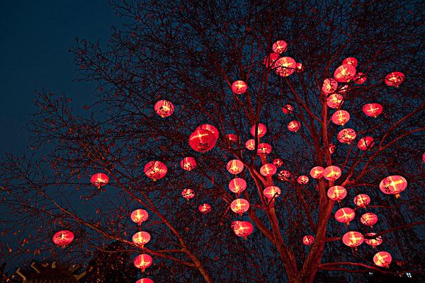 河南树上挂灯笼