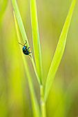 草叶上的绿色昆虫