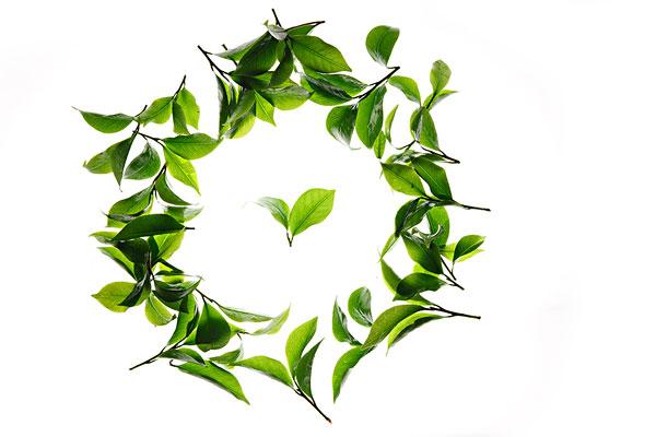 统一绿茶-统一绿茶图片下载-统一绿茶图片大全-全景网
