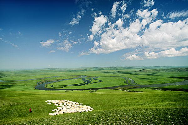 内蒙古额尔古纳河草原羊群