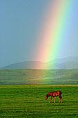 草原,彩虹,马蝇,海马,象棋马,马