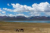 草地,西藏,马蝇,海马,象棋马,马