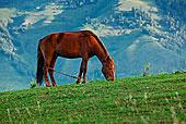 新疆,擦伤,放牧,马蝇,海马,象棋马,马