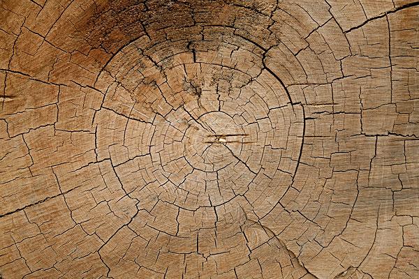 木头年轮裂纹纹理