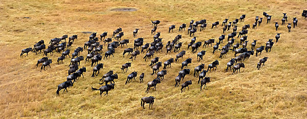 马赛马拉野生动物保护区