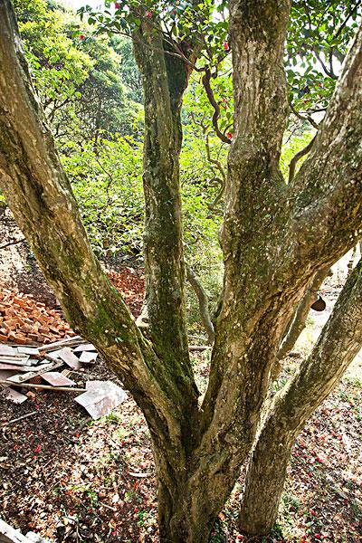 fo-11138375 [rm]木质