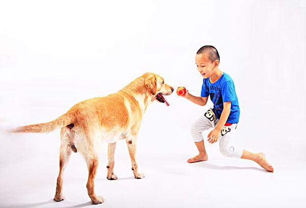 狗,拉布拉多,导盲犬,动物,表演,温顺,忠诚,游戏,男孩,伙伴,孩子,5