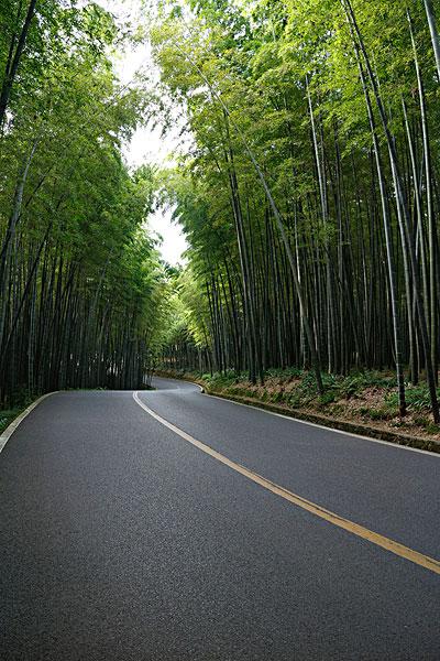 汽车素材,漂亮的竹林中的沥青路面