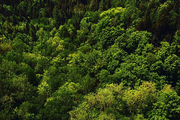 森林背景_森林背景图片