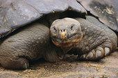 加拉帕戈斯,龟