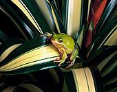 树蛙,植物