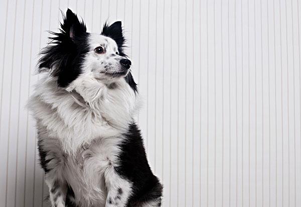 动物照片混合的