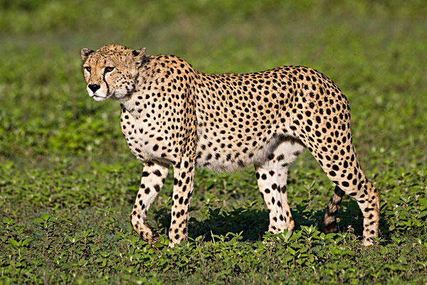 非洲动物大全大图