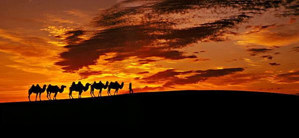 骆驼_全景图片