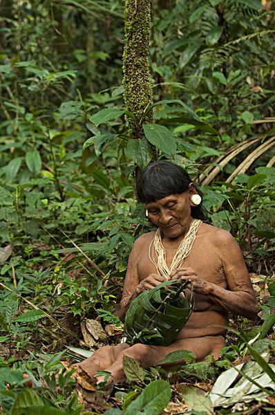 亚马逊热带雨林 亚马逊热带雨林图片