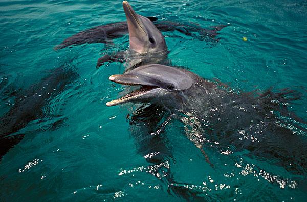 海豚图片-海豚图片图片下载-海豚图片图片大全-全景