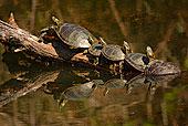 西部,锦龟,阳光,国家野生动植物保护区,华盛顿,美国